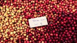 It's Harvest Time in Burundi!